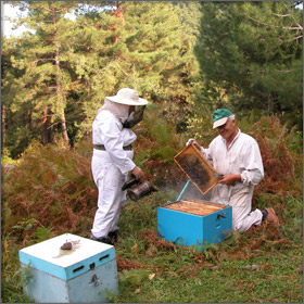 Honey Production on Thassos Island, Greece